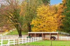 Paardlandbouwbedrijf met witte omheining en dalings kleurrijke bladeren. royalty-vrije stock afbeeldingen