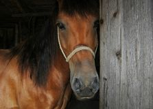 Paardlandbouwbedrijf, schone het paardstallen van Nice Royalty-vrije Stock Afbeelding
