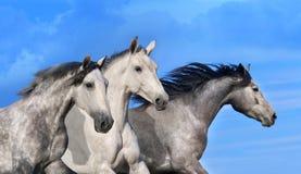 Paardlandbouwbedrijf, schone het paardstallen van Nice Stock Foto