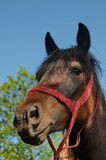 Paardlandbouwbedrijf, schone het paardstallen van Nice Stock Afbeelding