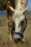Paardlandbouwbedrijf, schone het paardstallen van Nice Stock Fotografie