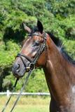 Paardlandbouwbedrijf, schone het paardstallen van Nice Royalty-vrije Stock Foto's