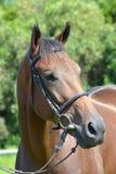 Paardlandbouwbedrijf, schone het paardstallen van Nice Royalty-vrije Stock Fotografie