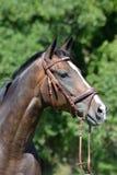 Paardlandbouwbedrijf, schone het paardstallen van Nice Royalty-vrije Stock Foto