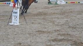 Paardlooppas en sprongen door een barrière bij de sportconcurrentie Sluit omhoog van paardvoeten het galopperen Professionele joc stock videobeelden