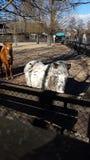 Paardpaardekracht Pferde Royalty-vrije Stock Fotografie