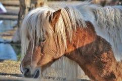 Paardponey stock fotografie
