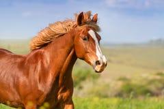 Paardportret in motie royalty-vrije stock afbeelding