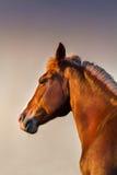 Paardportret in motie royalty-vrije stock foto