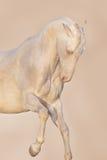 Paardportret in motie stock foto's