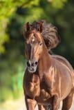 Paardportret in motie stock afbeelding