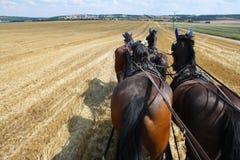 Paardquadriga Stock Foto's