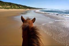 Paardrijden op strand Royalty-vrije Stock Foto's