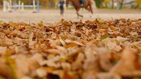 Paardrijden opleiding Langzame Motie stock videobeelden