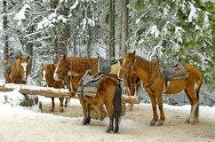 Paardrijdenclub in berg Rila Stock Foto's