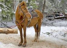 Paardrijdenclub in toevlucht Borovetz. Royalty-vrije Stock Foto