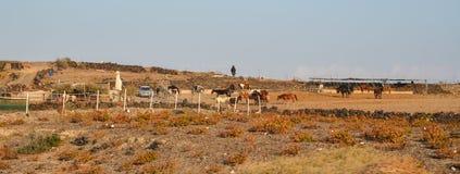 Paardrijdenlandbouwbedrijf bij ochtend stock fotografie
