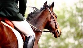 Paardrijderskunst Royalty-vrije Stock Foto's