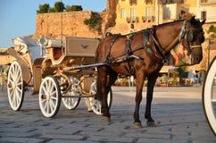 Paardrit stock foto's