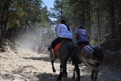 Paardrit in Kufri Royalty-vrije Stock Foto