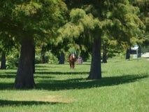 Paardruiter en Paard in Park Stock Foto