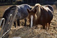 Paardschuur Stock Foto