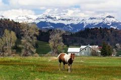 Paardsereniteit Royalty-vrije Stock Foto's