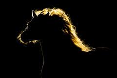 Paardsilhouet op zwarte royalty-vrije stock afbeelding