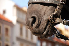 Paardsnuit en oude stad Royalty-vrije Stock Foto