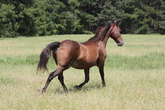 Paardspel stock foto
