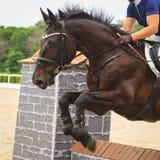 Paardsprongen over een hindernis in competities in het springen Royalty-vrije Stock Foto