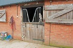 Paardstal Royalty-vrije Stock Afbeelding