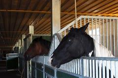 Paardstal Royalty-vrije Stock Foto's