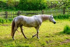Paardstelen over het paardkoord Royalty-vrije Stock Fotografie