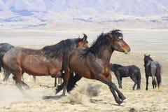 Paardstut royalty-vrije stock foto