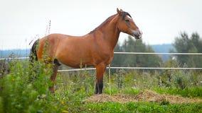 Paardtribunes in paddock stock videobeelden