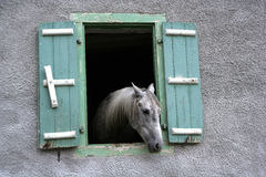 Paardvenster Stock Afbeelding