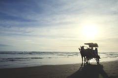 Paardvervoer bij het strand Royalty-vrije Stock Afbeelding