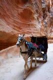 Paardvervoer in een kloof, Siq-canion in Petra Stock Afbeelding