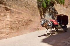 Paardvervoer in een kloof, Siq-canion in Petra Stock Fotografie