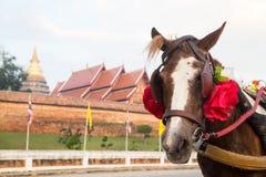 Paardvervoer in Phra die Lampang Luang, Thailand Royalty-vrije Stock Foto