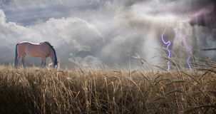 Paardvoer op gebied met donderonweer Royalty-vrije Stock Afbeelding