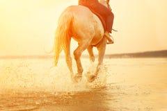 Paardvoeten De hoeven raken het water, heffen plonsen en splashes ag op stock foto