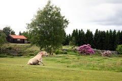 Paardzitting op een mooi gebied stock afbeelding