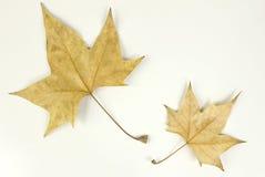 Paare Blätter Stockfotos