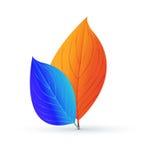 Paare Blätter von Orange und von Blauem Stockfotos