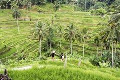 Paare in den Bali-Reisterrassen Lizenzfreie Stockfotografie