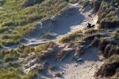 Paare in den Dünen Stockbild