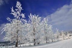 Paare der Bäume abgedeckt durch Schnee Stockfotos