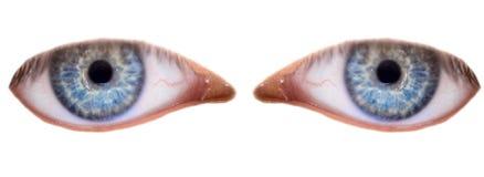Paare der blauen Augen Stockfotografie